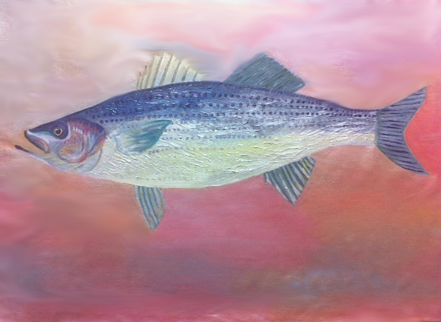 Large Stripped Bass