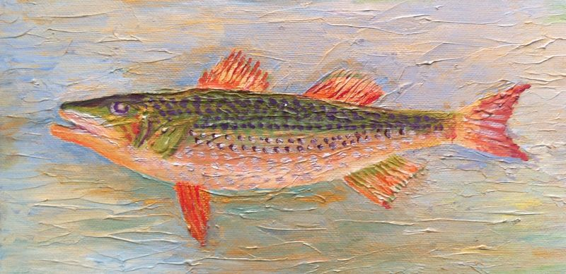 Purple Spot Fish