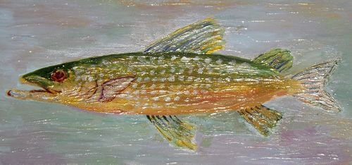 Red Eye Fish 1