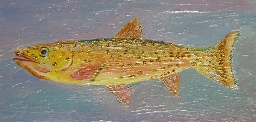 Sharon Johe Rocky Mtn Spotted Trout